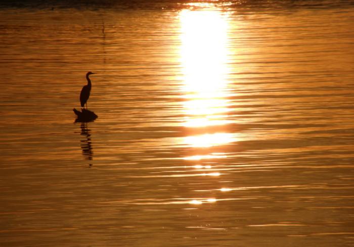 7) Heron on the water in Astoria