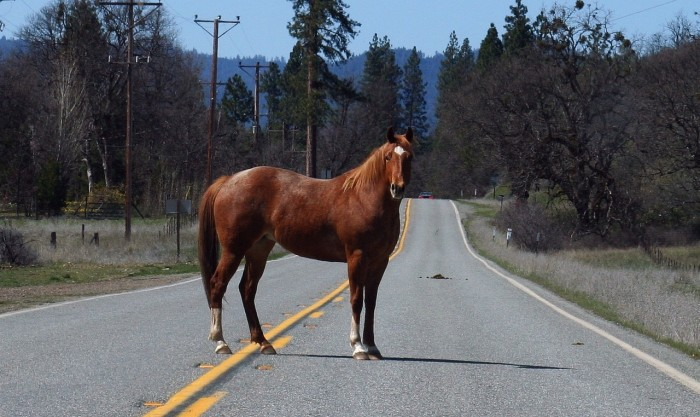 5) Horses may not be tied to a tree on a public highway.
