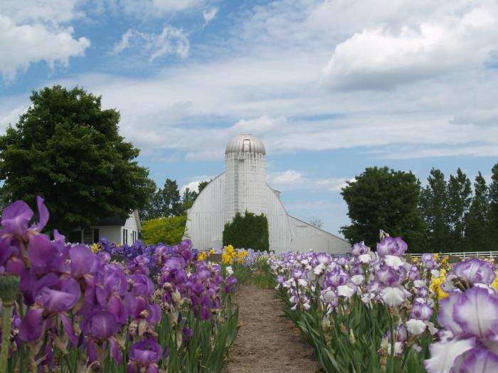 8) Iris Farm
