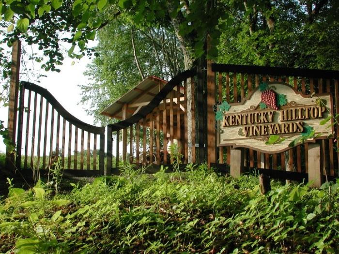 8. Kentucky Hilltop Vineyards