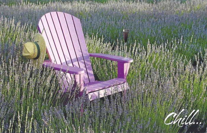 10. This shows you that farms aren't all cows, chickens, and such. This farm is a lavender farm, La Bastide des Lavandes in York, SC.