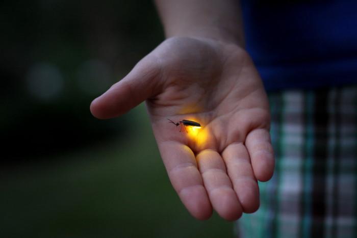 5) Spent the summer catching lightning bugs