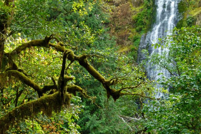 4) Munson Creek Falls State Natural Site