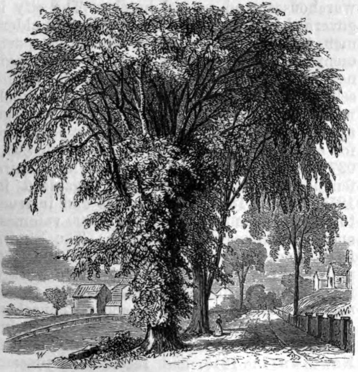 5. The American Elm is North Dakota's official state tree.