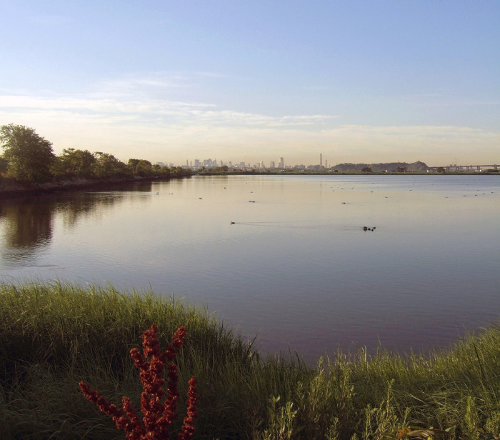 5. Meadowlands Marshes, Lyndhurst