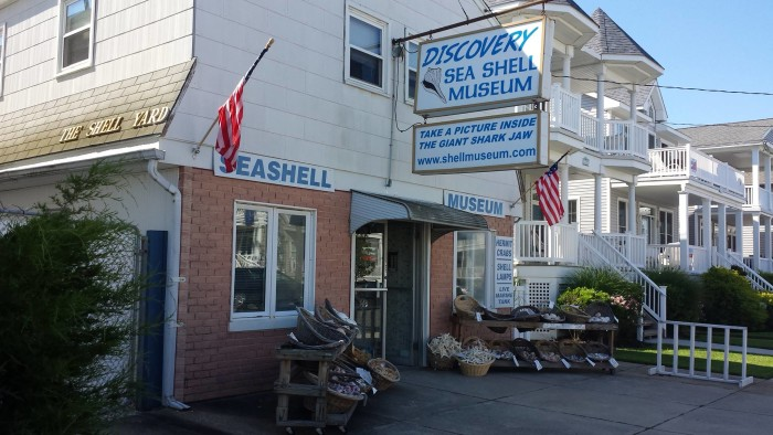 NJ Seashell Musuem