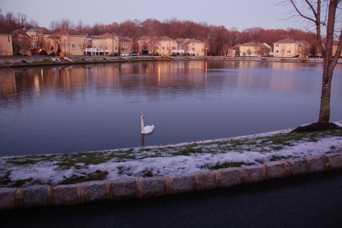 11. Swan Lake, Holmdel