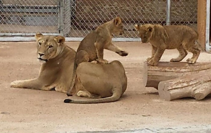 1. Lion Habitat Ranch - Henderson, NV