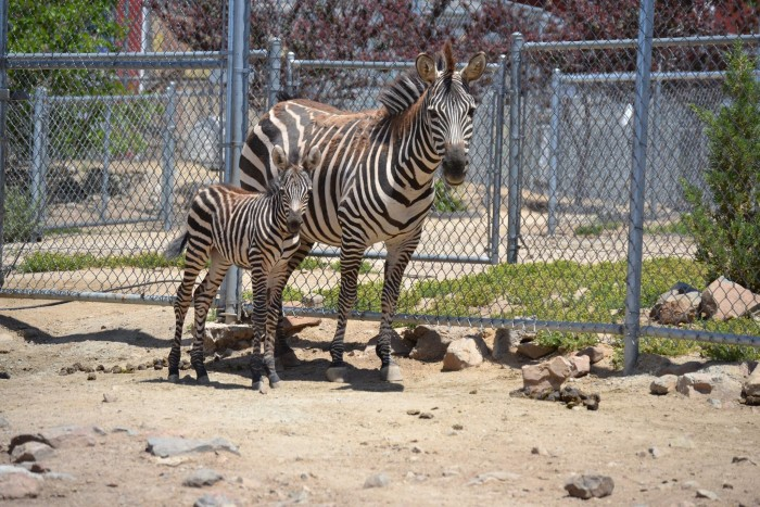2. Sierra Safari Zoo - Reno, NV