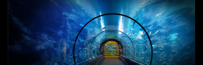 8. Shark Reef Aquarium at Mandalay Bay Resort & Casino - Las Vegas, NV