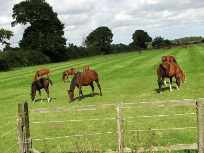 6. Old Friends Retired Racehorse Stables