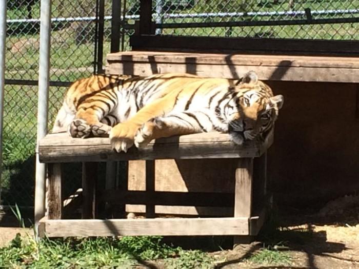 8) Oregon Tiger Sanctuary, Eagle Point