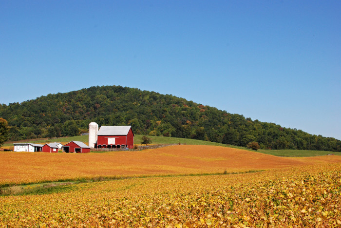 17. Picture Perfect Farm Scene in the Shenandoah, Wolftown