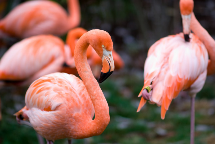6) You can see these stunning flamingos at the Nashville Zoo