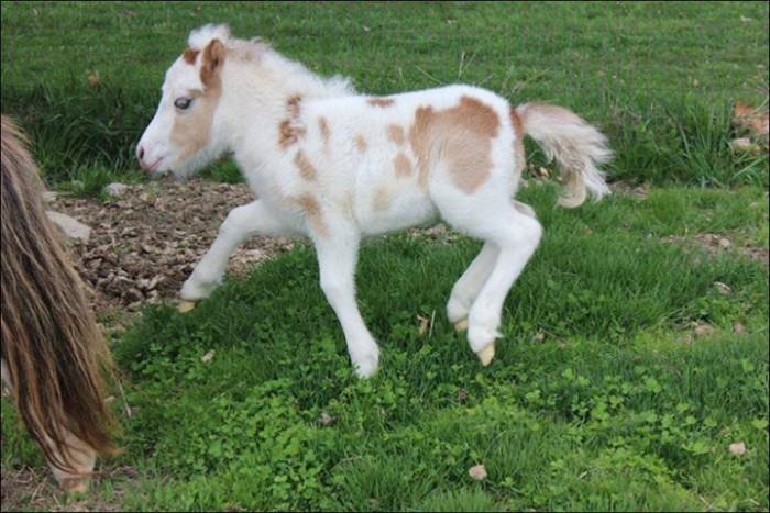 Pleasant Acres Pony