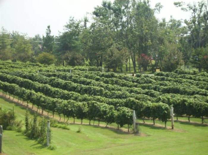 4. Purple Toad Winery and Vineyard