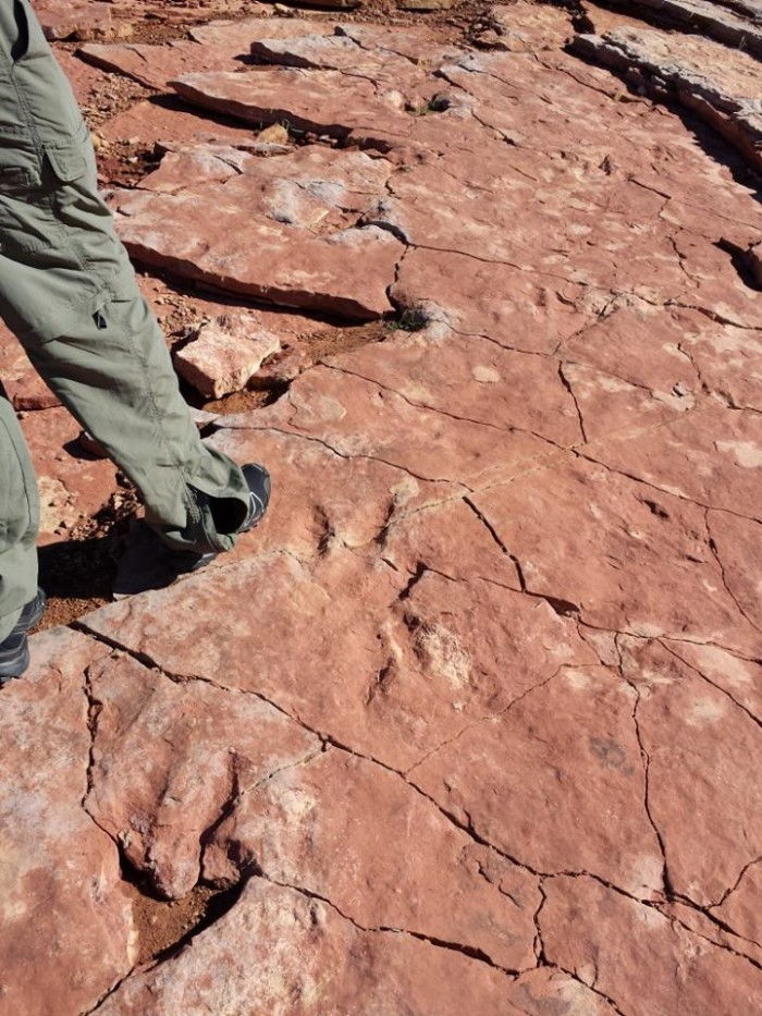10) Walk in the Footsteps of Dinosaurs at Red Fleet State Park