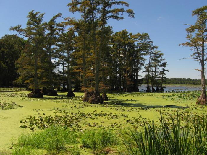 5) Reelfoot Lake - Tiptonville