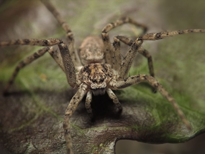 3. Running Crab Spider