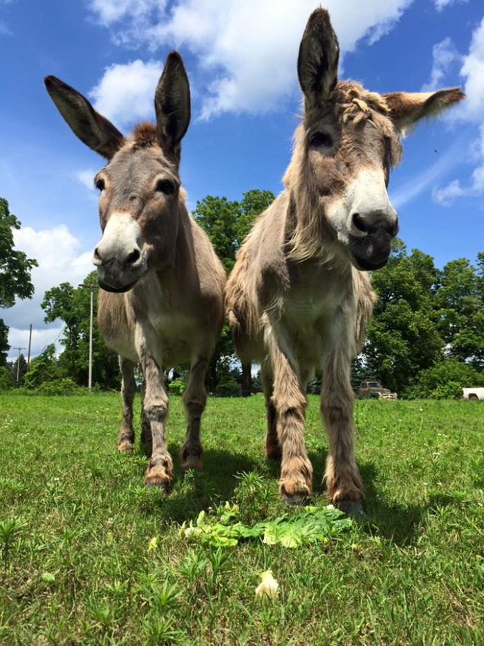 4) SASHA Farm Animal Sanctuary, Manchester