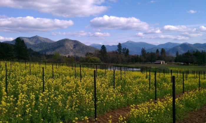 2) Serra Vineyards, Grants Pass
