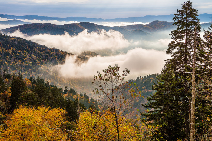 4) Did you know that the 'smoky' mountain term is bred from extensive vegetation that traps moisture and releases it as a mist? So neat.