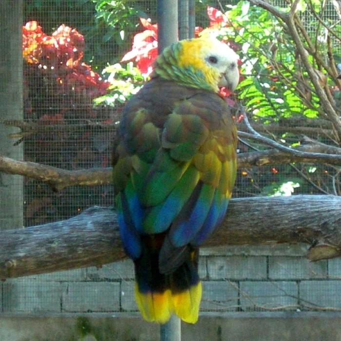 4. Sousleys Parrot Garden and River Boat Restaurant