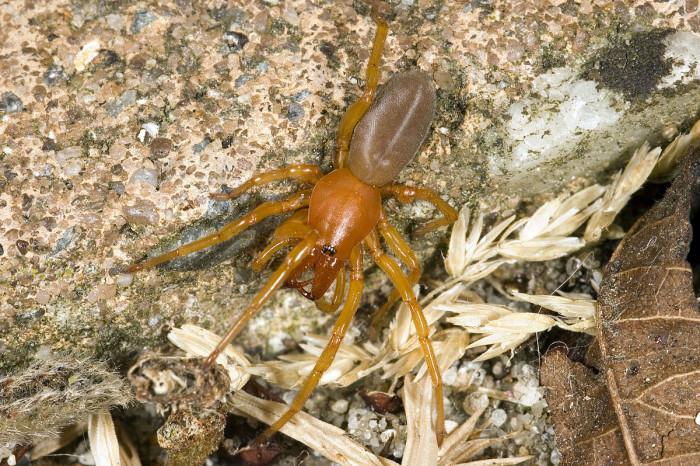 1) Sowbug Killer Spider