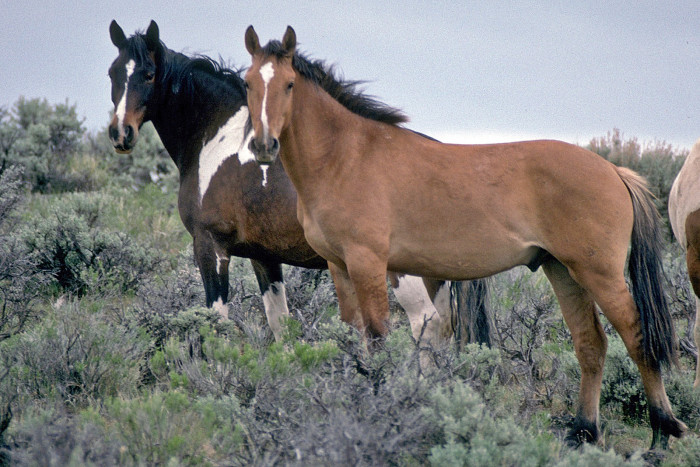 2) Steens Mountain Backcountry Byway