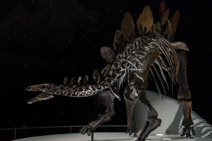 10.) The first ever Stegosaurus fossils were found just outside of Grand Junction.