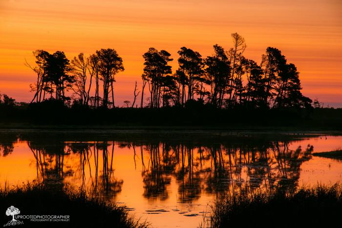 21. Sunrise Silhouette at Assateague Island