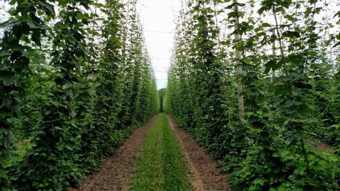 6) Top Hops Farm, Atlas Township