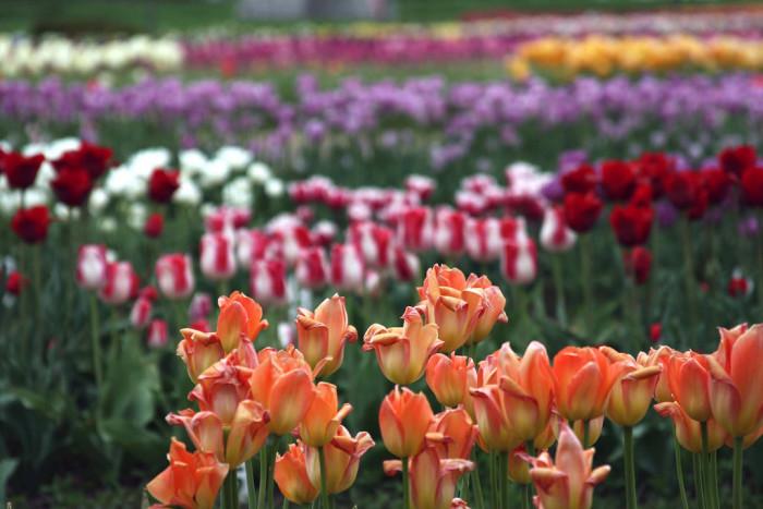 1) Veldheer Tulip Farm