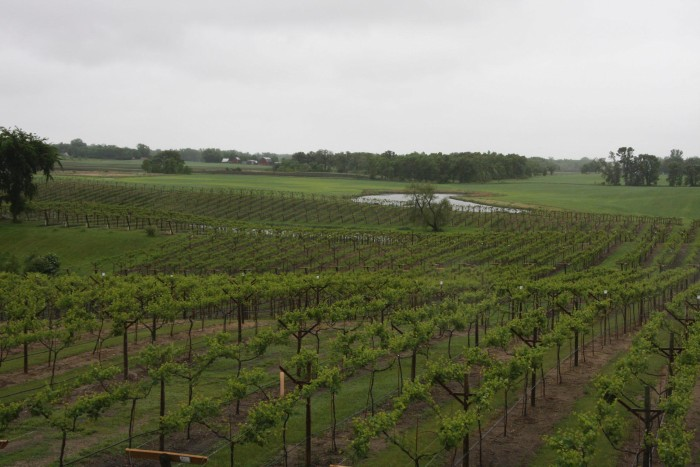 20. Crow River Winery near Hutchinson is an amazing farm winery that is great for hosting events.