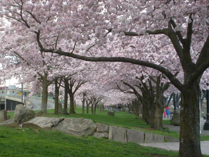 1) Waterfront Park, Portland