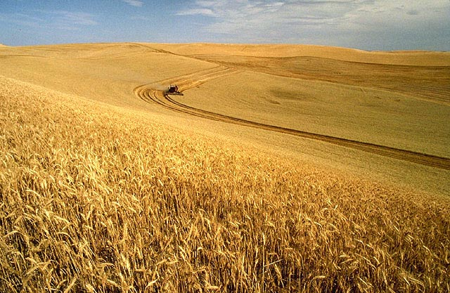 """3.) """"All I saw was fields of wheat...It was the most boring drive ever!"""" (Outsiders Perspective)"""
