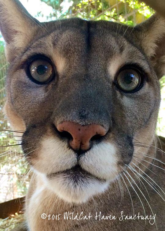 5) Wildcat Haven Sanctuary, Sherwood