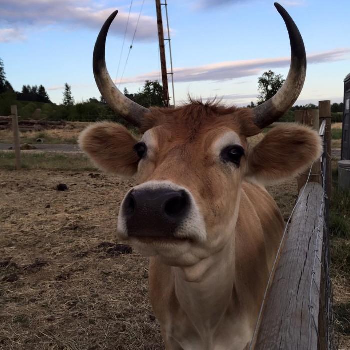 4) Wildwood Farm Sanctuary, Newberg