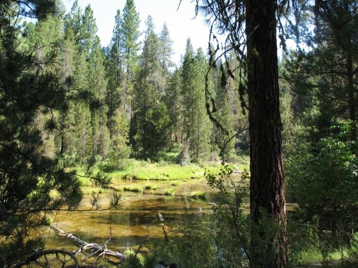 1) Williamson River