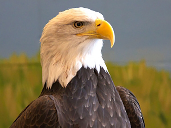 10. National Eagle Center