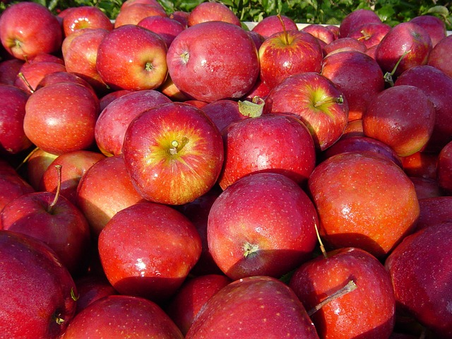 Apples Straight From the Tree