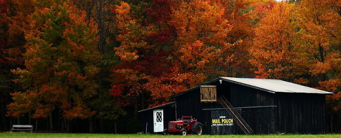 8. This barn next to trees with leaves so red they look like they're on fire.
