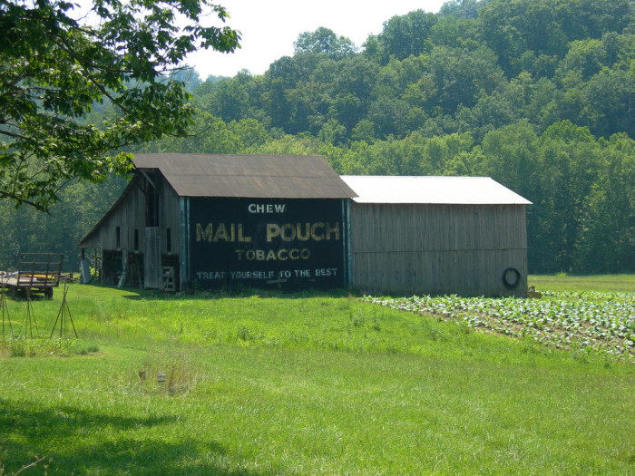 5. This old barn with a Mail Pouch ad on it.