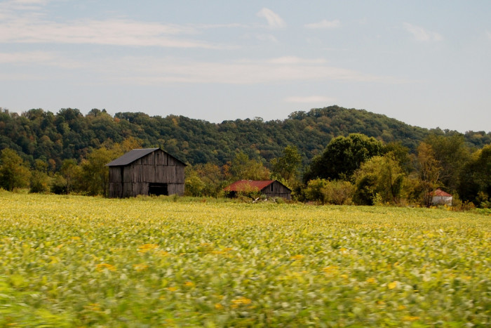 6. These barns in a field of gold.