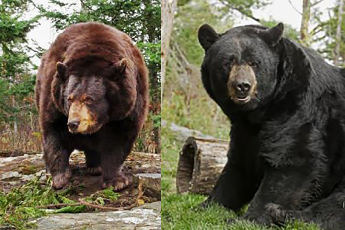 9. North American Bear Center