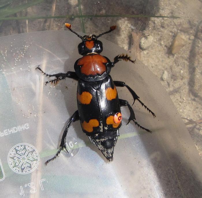 5. Beetles