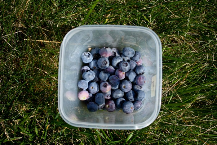 6. Berries.