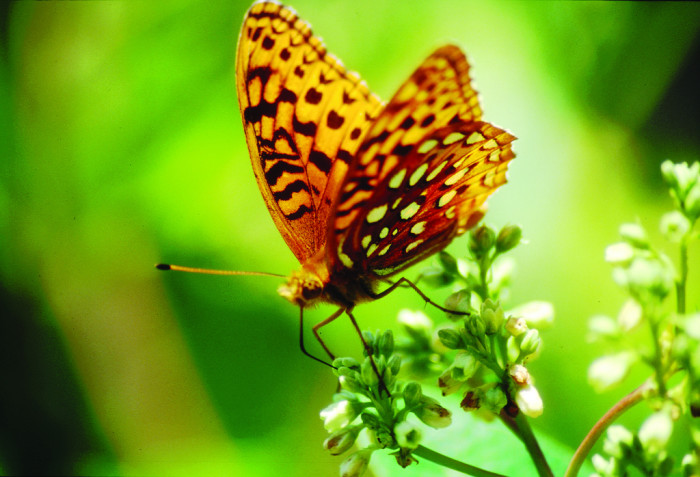 12. This butterfly