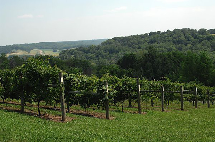 17. Cannon River Winery in Cannon Falls. A slice of beautiful history with great wine and music.