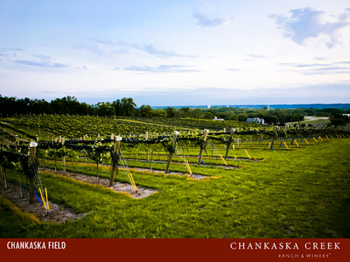 19. Chankaska Creek Ranch and Winery. A gorgeous farm winery, you'll love the cozy atmosphere.